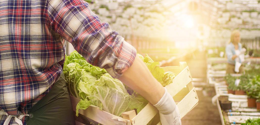 Премьер РФ призвал снизить зависимость Дальнего Востока от импорта овощей