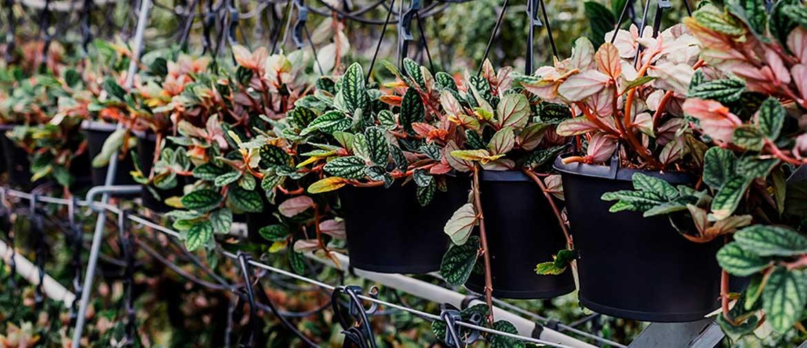 Горшки для растений Bato