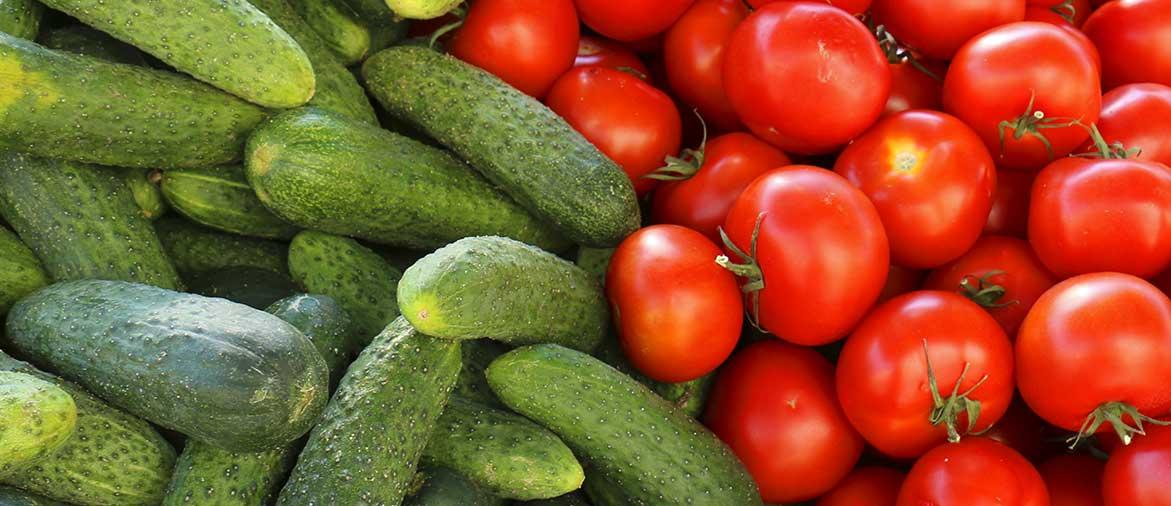 Производство тепличных овощей в России увеличилось на 9%