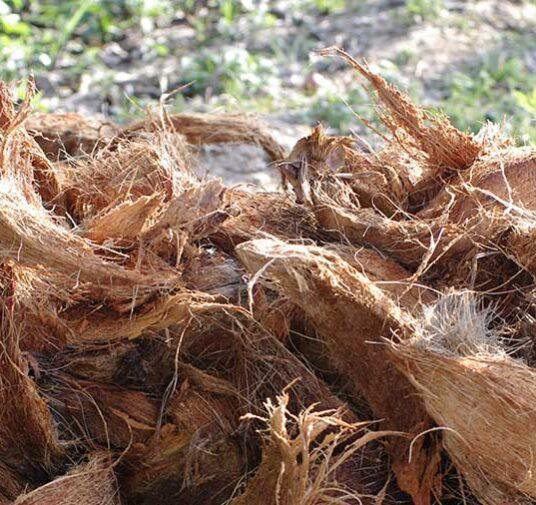 Преимущества кокосового волокна в гидропонике